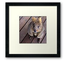 Quokka - Well hello there Framed Print