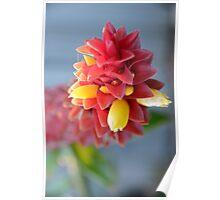 Scruffy Ginger Flower Poster
