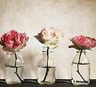 Roses by Anne Staub