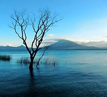 Atitlan tree is deep in the water by SysterS