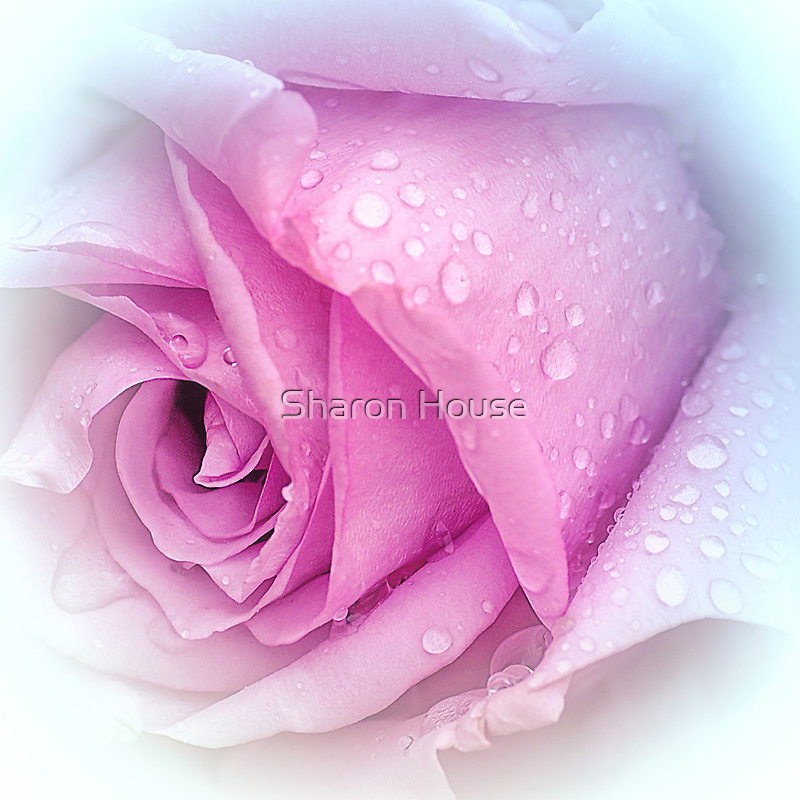 And So Became The Rose.... by Sharon House