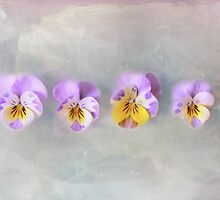 vintage pansies by syoung-photo