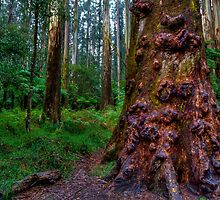Old Forest Giant by Adam Armstrong
