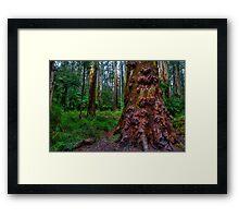 Old Forest Giant Framed Print