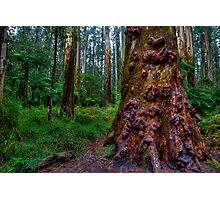 Old Forest Giant Photographic Print
