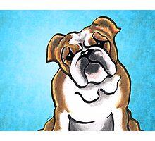 Bulldog Brown/White Royal Photographic Print