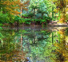 Reflections by Adam Armstrong