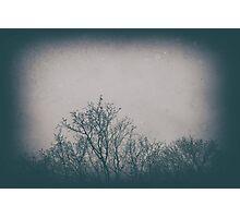 Trees are Art Photographic Print