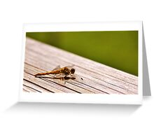 Gossamer wings Greeting Card
