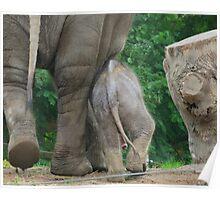 ... Want een Olifant gaat door ... (Colonel Hathi Elephant March) Poster