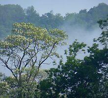Misty Backyard by WildThingPhotos