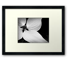 The Delicate Lines of Dogwood Framed Print