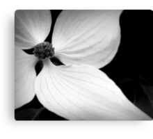 The Delicate Lines of Dogwood Canvas Print