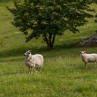 Mother sheep watching over her lamb by Alexander Chesham