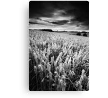 Harvest Whisper BW Canvas Print