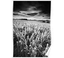 Harvest Whisper BW Poster