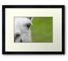 In your face Lama Framed Print
