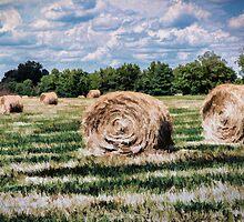 Rural Georgia by shuttermom