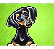 Dachsund Smooth Black/Tan Lime Photographic Print