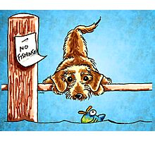 Wirehaired Dachshund Dock Dog Photographic Print