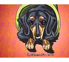 Dachshund in Flower Pot Red Photographic Print