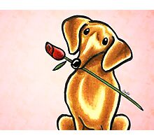 Dachshund with Rose Pink Photographic Print