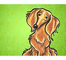 Long Haired Red Dachshund Lime Photographic Print