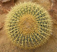 Golden Barrel Cactus by lezvee