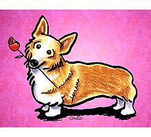 Corgi with Rose Pink Photographic Print