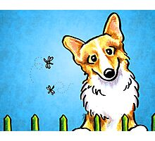 Corgi Fence Patrol Blue Photographic Print