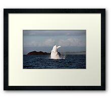 The Big White Whale Framed Print