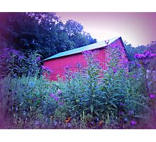 Red Barn and Iron Weed at Dusk Photographic Print