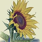 Vintage Sunflower Art Print by sturgils