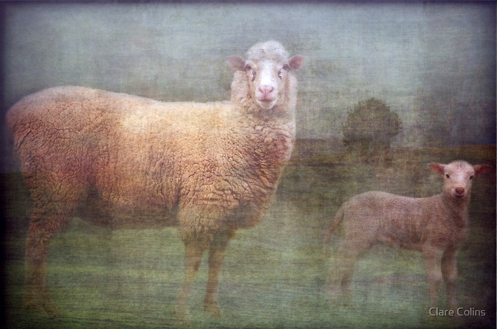 Springtime Sheep - Ewe and Lamb by Clare Colins