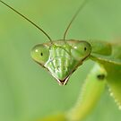 Praying Mantis (iPad Case) by William Brennan