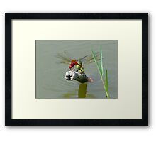 Big Red and the Green Pond Dragons Framed Print