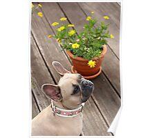 Flower & Dog Still Life Poster