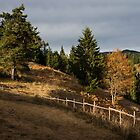 Fenced In Warm Autumn Light by Georgia Mizuleva