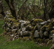 Old moss covered rock fence by Alexander Chesham