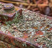 Rust and Lichen by Adam Armstrong