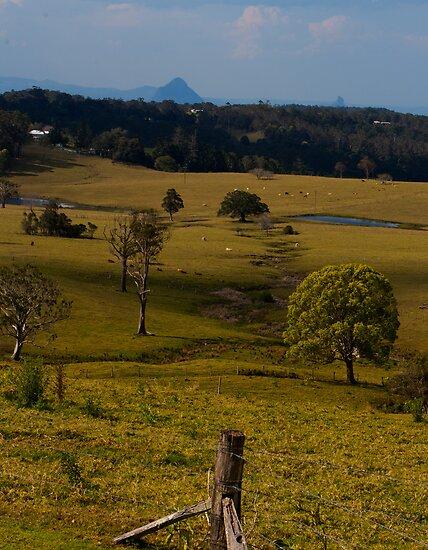 Golden Grass by Jordan Miscamble