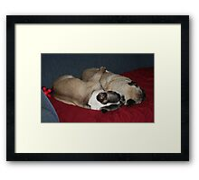 1 Couch Potato, 2 Couch Potato Framed Print