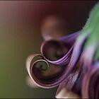 Curls by Helenvandy