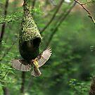 Bird - Nesting by Vivek Bakshi
