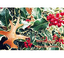 holly christmas Photographic Print