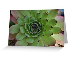 Houseleek (Sempervivum) Photo with purple tips Greeting Card
