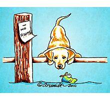 Yellow Lab Dock Dog Photographic Print