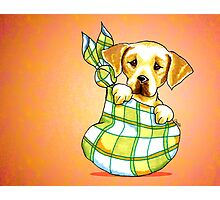 Yellow Lab New Puppy Orange Photographic Print
