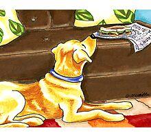 Yellow Lab Sandwich Thief Photographic Print