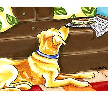Yellow Lab Sandwich Thief Photographic Print